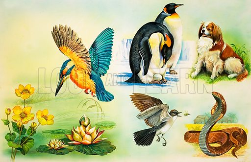 Animals montage. Includes a Kingfisher, Penguins, a dog, a bird catching a wasp and a rattlesnake. Previously unused artwork from Once Upon a Time 168 (not published). Original artwork loaned for scanning by the Illustration Art Gallery.