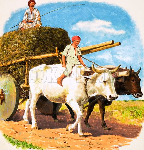 O for Oxen. A pair of oxen pulling an ox-cart in Turkey driven by a father and son. From Treasure no. 106 (23 January 1965).