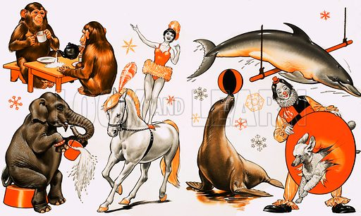 Circus montage, including chimp's tea party; an elephant, woman standing on a horese, dolphin, a seal balancing a ball and a dog jumping through a clown's hoop.