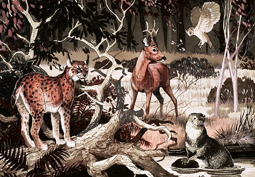 Night time at the water hole. Lynx, deer, owl and otter meet at a water hole.
