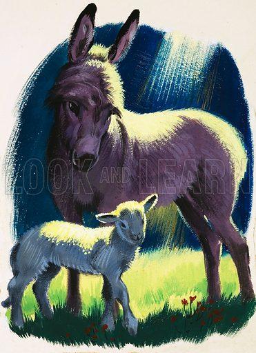 Donkey and lamb.