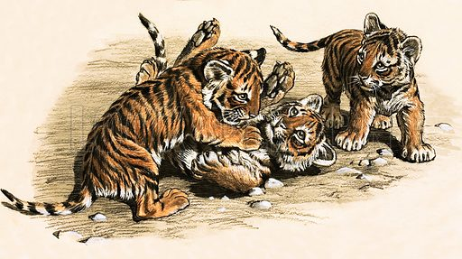 Tiger Cubs. Original artwork loaned for scanning by the Illustration Art Gallery.