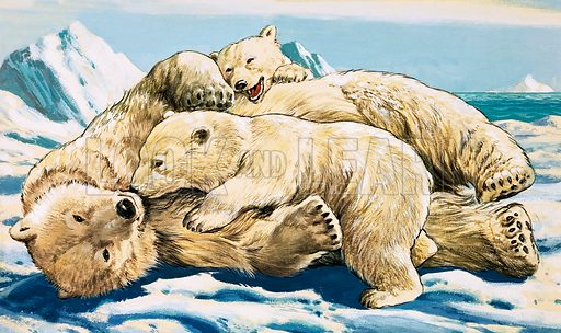 Polar Bear and Cubs. by the Illustrated Art Gallery.
