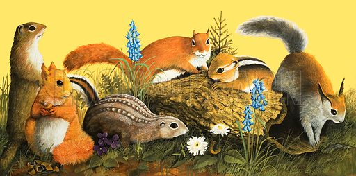 The Squirrel Family. (LtoR): Marmot, Eurasian Red Squirrel, Lined Ground Squirrel, North American Red Squirrel, Chupmunk, Tassel-eared Squirrel. From Once Upon a Time no. 139 (9 October 1971).