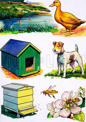 Animals and Their Homes.