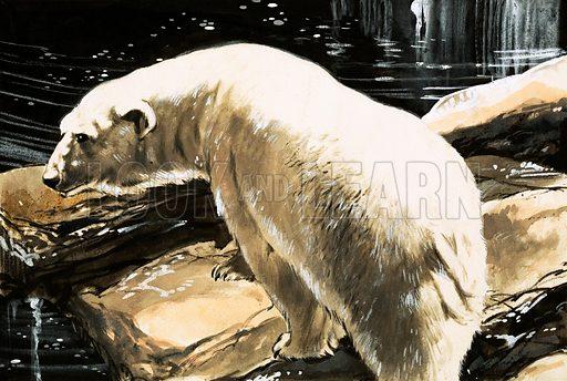 Polar Bear. From Treasure (?).