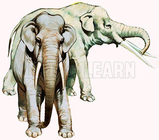 Elephants. Original artwork loaned for scanning by the Illustration Art Gallery.
