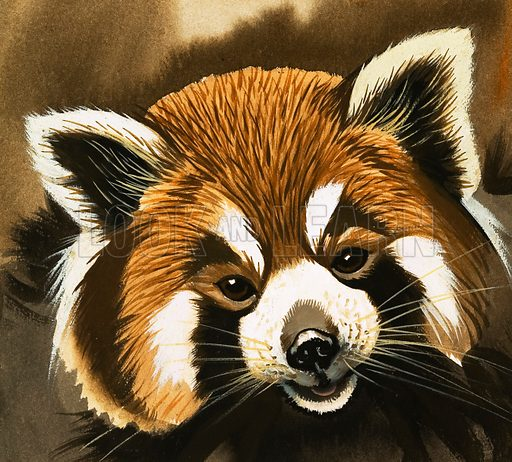 Raccoon. Unpublished artwork intended for Once Upon a Time no. 172.
