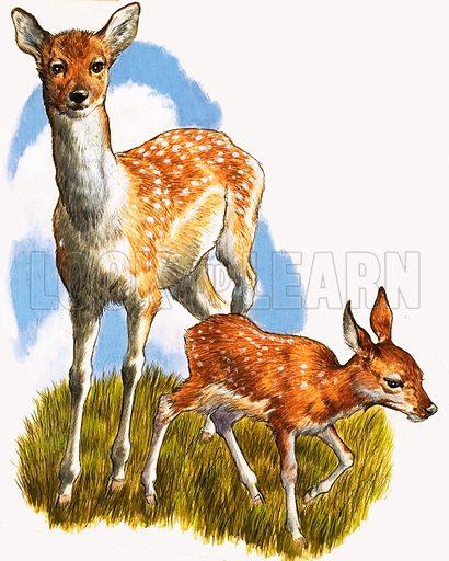 Deer and foal.