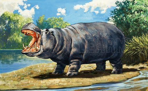 Hippopotamus. From Treasure no. 349 (20 September 1969). Original artwork loaned for scanning by the Illustration Art Gallery.