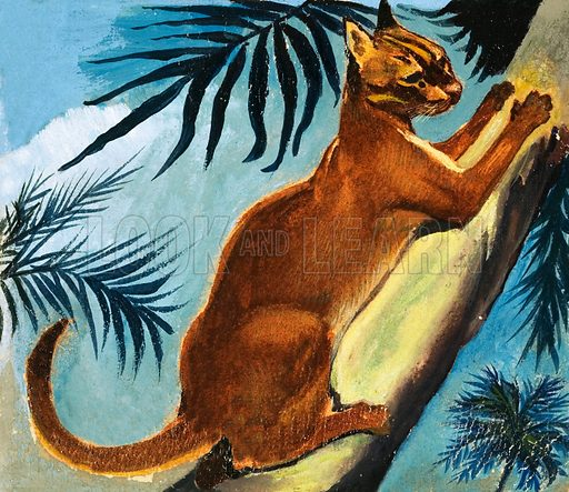 Golden Cat. From The Fifth Treasure Book of Animals (1970). Original artwork loaned for scanning by the Illustration Art Gallery.