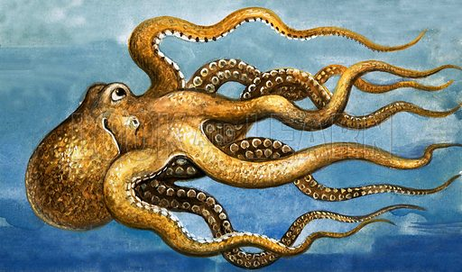 Octopus. Original artwork from Once Upon a Time 70.