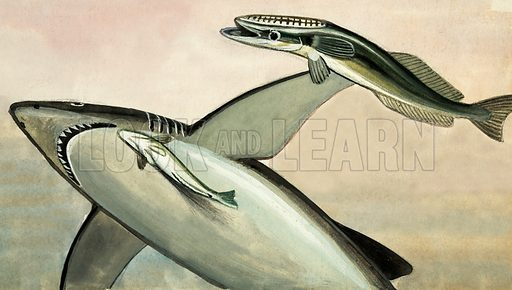 Unidentified shark and fish. Original artwork from Once Upon a Time 70.