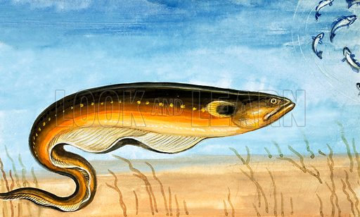 Unidentified fish. Original artwork from Once Upon a Time 70.