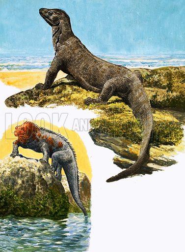 Peeps at Nature: Dragons. Komodo Monitor (top) and Sea Iguana. Original artwork from Treasure no. 71 (23 May 1964).