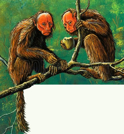 Strange Monkeys. Uskari Monkeys. From Treasure no. 166 (19 March 1966).