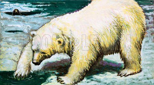Polar Bear fishing.