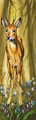 The Roe Deer. From Once Upon a Time no. 162 (18 March 1972).