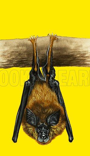 Bat. From Treasure Book.