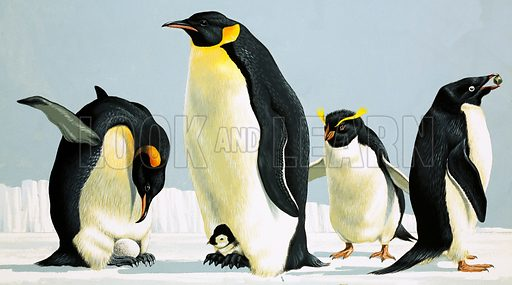 Penguins, including King Penguin and Emperor Penguin (3rd from left).