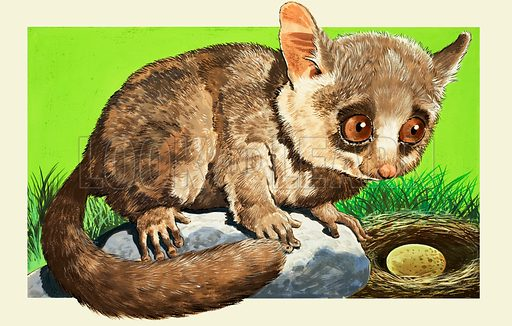 Bush Baby. From Once Upon a Time no. 160 (4 March 1972).