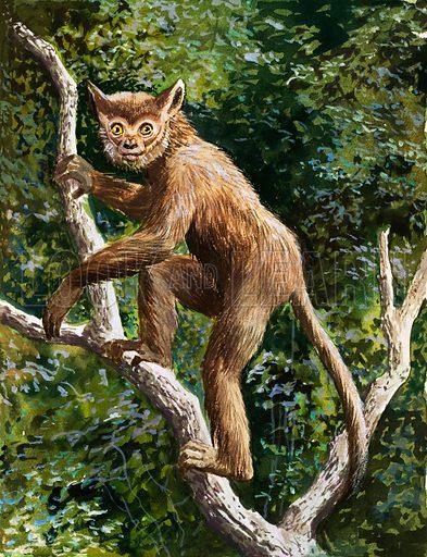 Lemur. Original artwork loaned for scanning by the Illustration Art Gallery.