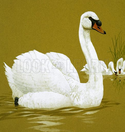 The Ugly Duckling. Original artwork loaned for scanning by the Illustration Art Gallery.