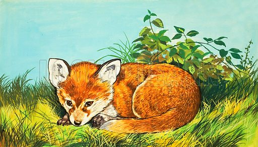 Fox cub. From Once Upon a Time Annual 1976.