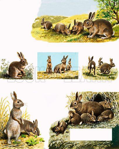 Rabbits montage.
