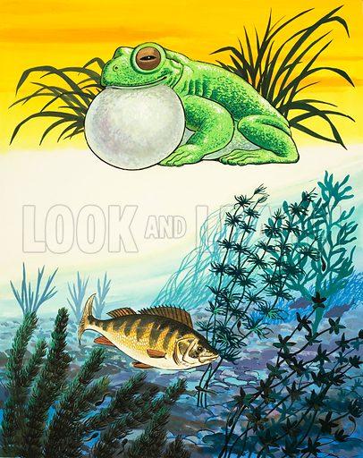 Frog and Fish.