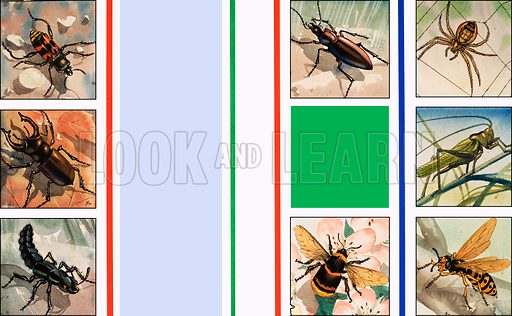 All sorts of insects. Original artwork loaned for scanning by the Illustration Art Gallery.