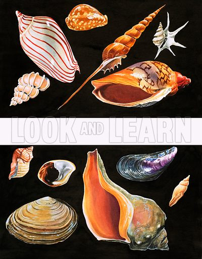 All Sorts of Sea Shell. From Once Upon a Time no. 78 (8 August 1970).
