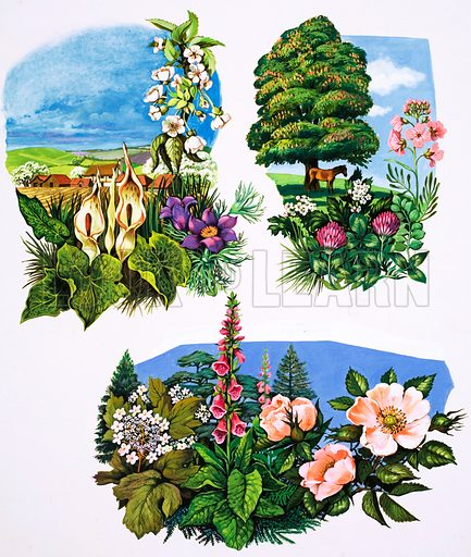 A Calendar of Plants. From Once Upon a Time no. 152 (8 January 1972).