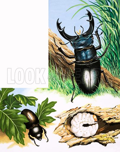 The story of the Stag Beetle. From Once Upon a Time 110 (20 March 1971).