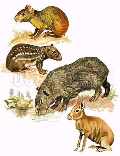 Unidentified animals montage. Original artwork from Once Upon a Time.