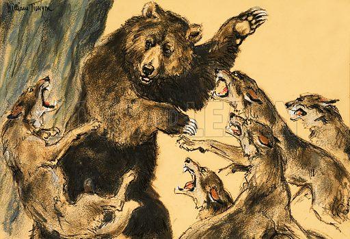 Bear fighting wolves. Original artwork (dated 20 Sept).
