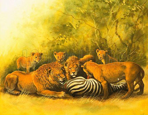 Lions feeding on a zebra carcass. Original artwork (dated 20 Sept).