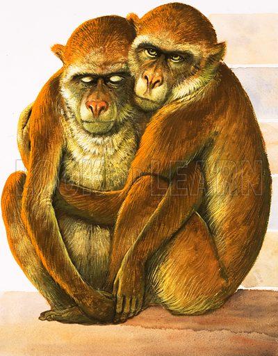 Unidentified monkeys. Original artwork.
