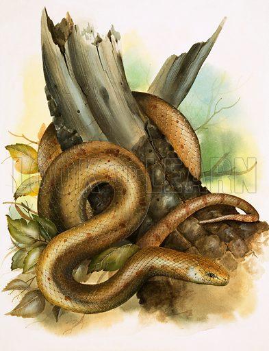 Snake. Original artwork loaned for scanning by the Illustration Art Gallery.