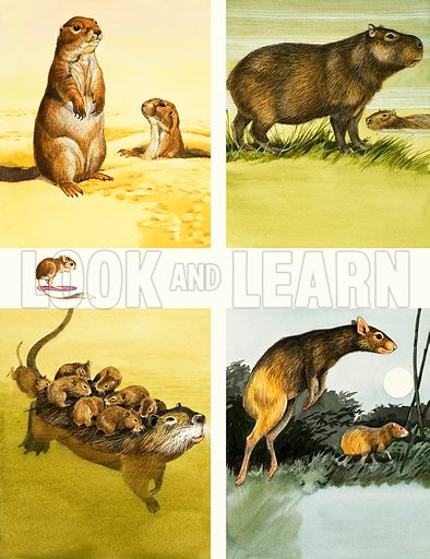 Unidentified animals montage including coypu. Original artwork from Once Upon a Time.