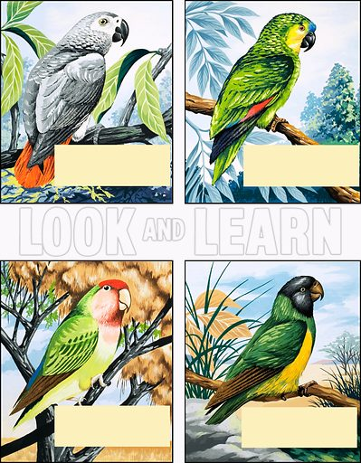 Different kinds of Parrot.