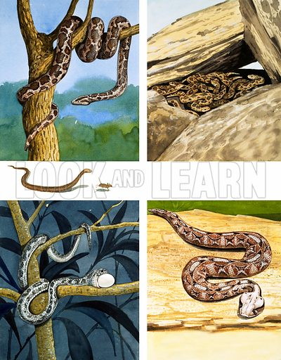 Different kinds of Snakes.