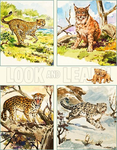 All Sorts of Big Cats. Top: Cheetah, Canadian Lynx; bottom: Ocelot, Snow Leopard. From Once Upon a Time no. 8 (5 April 1969).