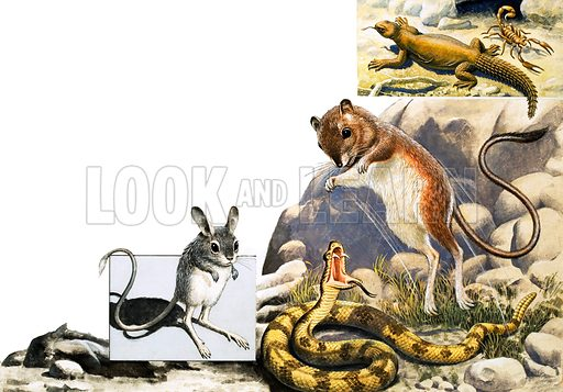 Unidentified animals montage with jerboa, snake and scorpion. Original artwork (from Once Upon a Time?) (dated 21/12/68).