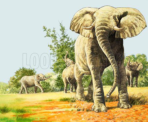 Nature Wonderland: Elephants of Africa. From Treasure no. 355 (1 November 1969).