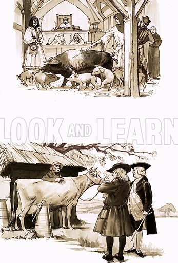 When Animals Were Tried in Court. Top: A sow and her piglets are summoned to appear before the court; Bottom: A court official reads out the charges to a cow accused of trampling a boy to death. From Look and Learn no. 527 (19 February 1972). Original artwork loaned for scanning by the Illustration Art Gallery.
