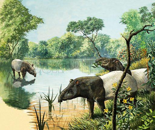 Nature Wonderland: Tapirs. From Treasure no. 354 (25 October 1969).