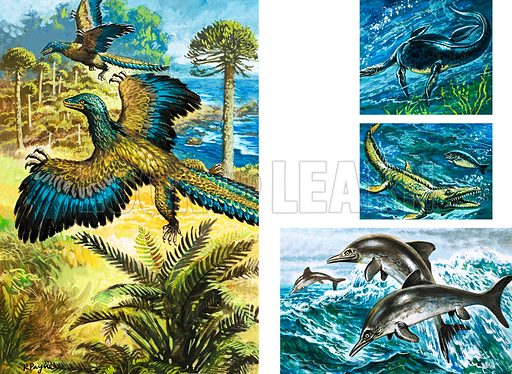 The search for dinosaurs. (Left) Archaeopreryx; (Right from top) Macroplata, Mosasaur and Ichthyosaur. Original artwork from Look and Learn Book 1982.