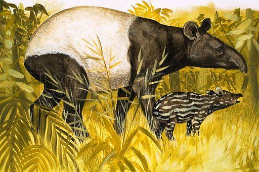 Peeps at Nature: The Tapir. From Treasure no. 147 (6 November 1965).