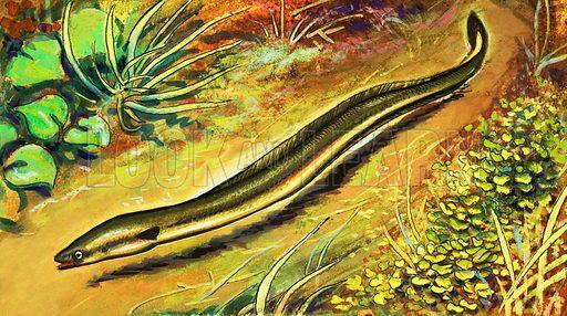 Eel. Original unpublished artwork intended for Once Upon a Time 170.